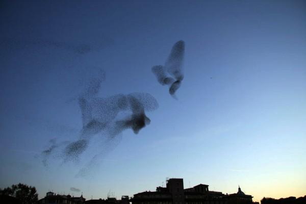 StarlingsOverRome