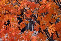 2010 - Autumn in Vermont